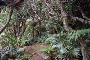 Densely packed cloud forest on summit